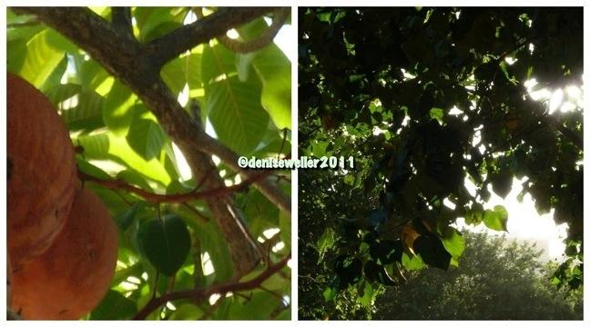 20111010-205416.jpg
